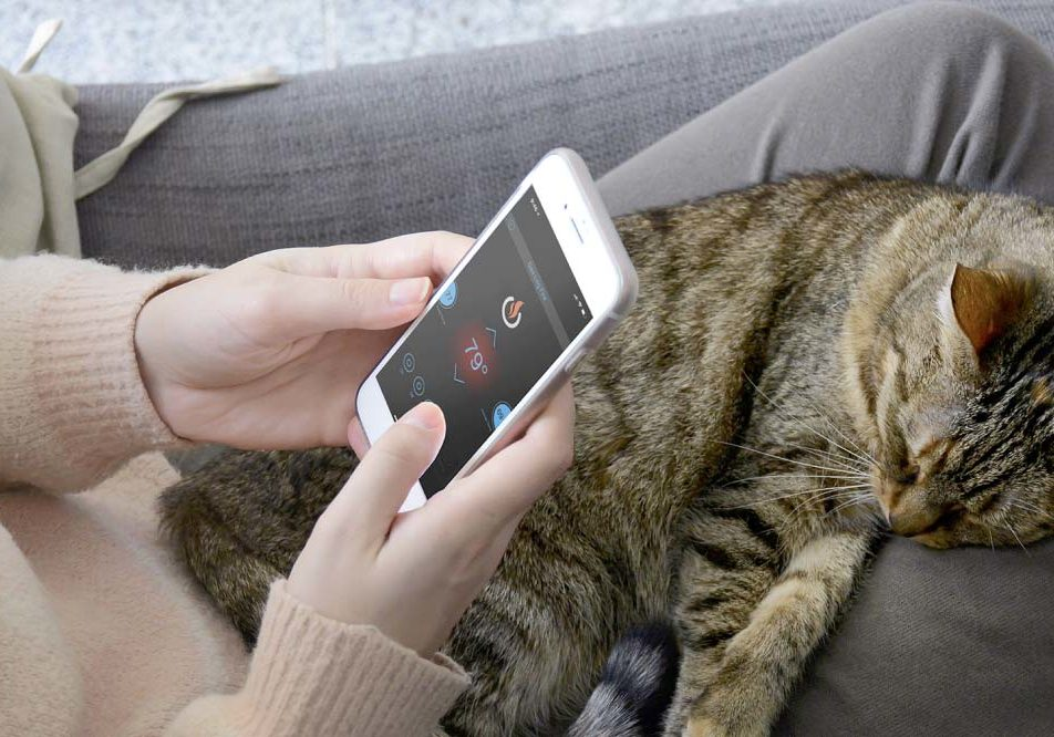 Cat-on-Lap-with-App-on-Phone